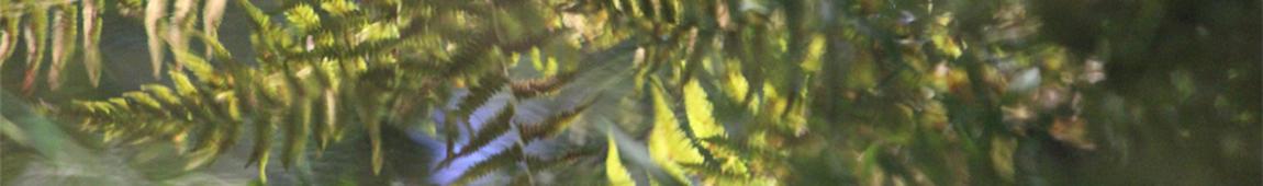 Quoia narrow header fern